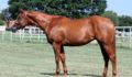 Zippos Old Gold mare x Blazing Hot