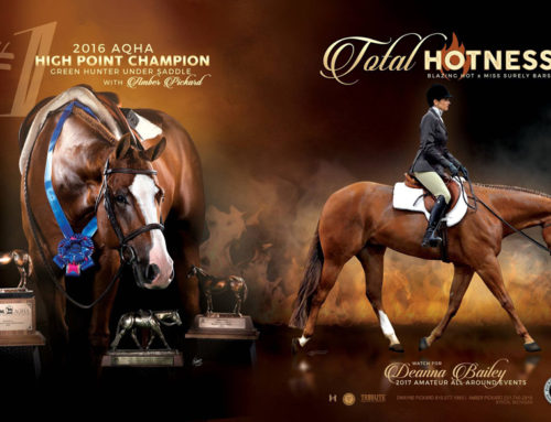 Total Hotness 2016 AQHA #1 High Point Champion