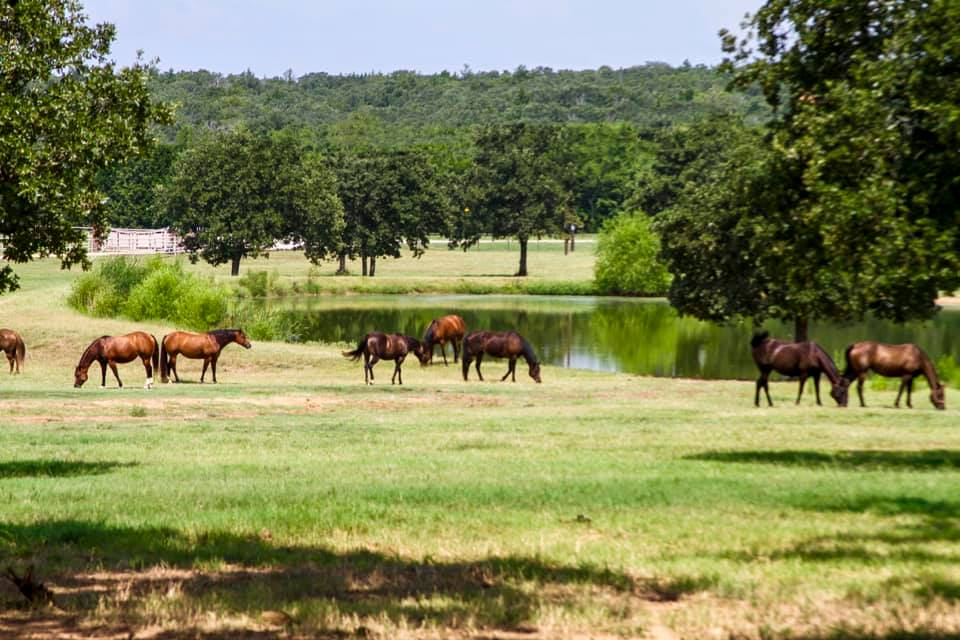 Ranch Lake Horses