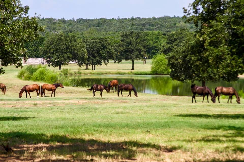 Ranch Lake Horses